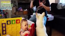 Funny Babies Laughing at Dogs Eating Bubbles Compilation April 2015 Funny Animals Baby Dog