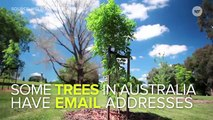 People In Australia Are Sending Love Letters To Trees