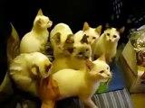 Ping Pong Cats