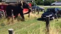 Des éléphants de cirque se rebellent contre leurs bourreaux.