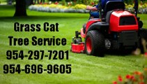 754-214-4659 | Stump Grinding Fort Lauderdale, Tree Trimming, Stump Grinding, Expert Tree Service