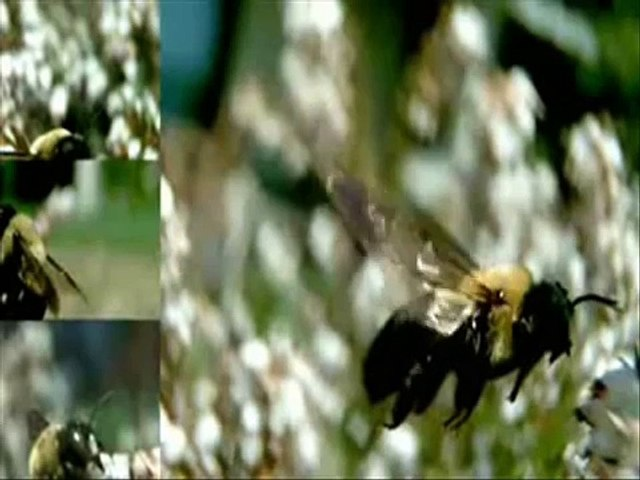 What Quran Says About Honey Bee Quran mai Shahad ki Makhi ka zikr by Hazrat Mufti Tariq Masood