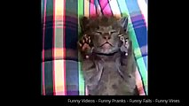 Funny Animals - Funny Cats Compilation Videos - Funny cats Vines Compilation