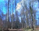 Forêt de Lyons - Lyons-la-Forêt.avi