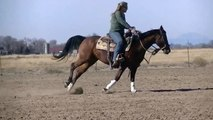 LIttle Nic Chic - 'SOLD**10 AQHA Bay mare by NIC IT IN THE BUD - Reined Cowhorse, Reining, NRCHA