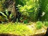 Fluval Osaka 155 planted aquarium