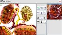Metapathia GR Clinical 3D (Русский)