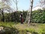 Régis coupe un arbre