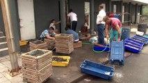 Açores: de père en fils, la dure vie des pêcheurs de Rabo de Peixe