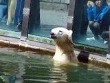 Knut- erstes Treffen mit Mama Tosca.WMV