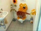 Cat on a human toilet. Die Katze auf dem Klo.