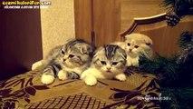 Sırayla Esneşen Sevimli Yavru Kediler
