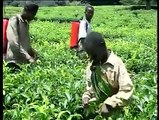 World Day Against Child labour 2007 - Child labour in agriculture 2007