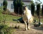 Mon cheval au galop !