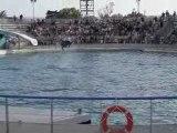 Les dauphins du Marineland
