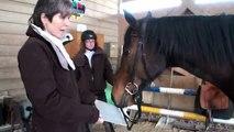 9010 - Pferdesport: Quantenenergie auf dem Pferdehof - Quantenheilung für ein Rennpferd Teil 1