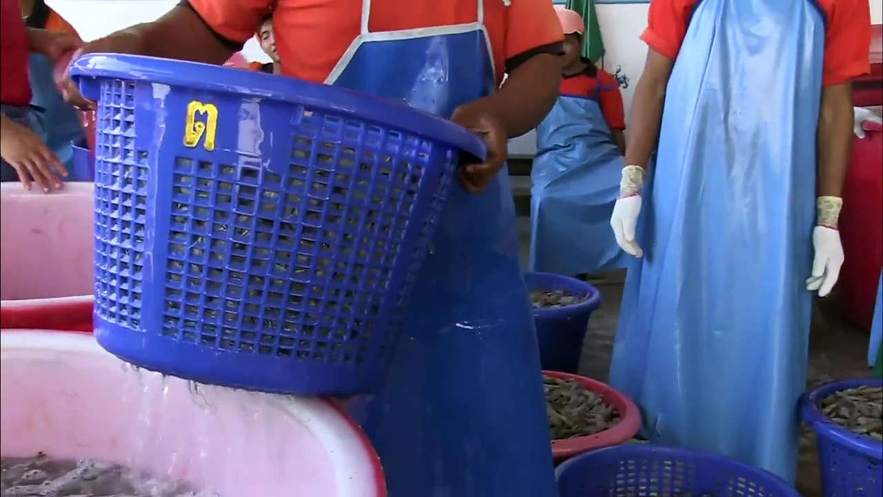 Thai Shrimp Industry Exploits Workers to Sell Cheap Shrimp