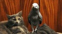 animal friends friends  Clip