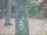 This Squirrel Has Gone Nuts aka Squirrel Gone Wild aka Mr. Tree's Girlfriend