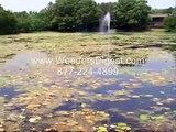 Blue Green Algae Pond Aeration Pond Airation Pond Aration Pond Aeration