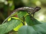 E-PL1錄影檔-攀木蜥蜴