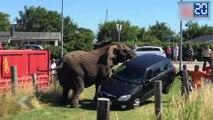 Des éléphants déchaînés au Danemark ! - Le Rewind du Vendredi 17 Juillet 2015