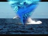 Les dauphins et les baleines