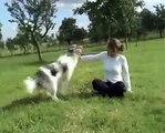 L'obérythmée ou l'art de faire danser son chien!