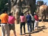 Elephant tug o' war