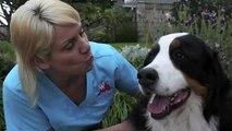 San Diego Mobile Dog Groomers Love Kisses - Awesome Doggies