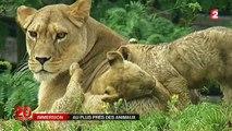 Dans les coulisses du zoo de Vincennes, au plus près des animaux
