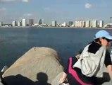 Ballenas en el puerto de Punta del Este Uruguay