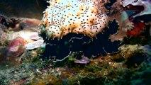 Diving Alona Beach Reef, Panglao, Bohol, Philippines