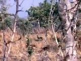 Chasse à l'éléphant Safari 1965-1967 au Tchad (Afrique)
