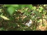 Van Eck Forest Project - Van Eck Creek