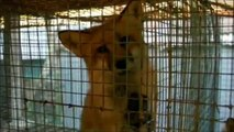 Prawa zwierząt po ludzku 1# - Viva! Akcja dla zwierząt - Łódź