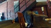 Humour : voici Twinkle Tush, le cache à anus pour vos chats