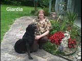Giardia is a protozoal Parasite that can cause diarrhea in your dog