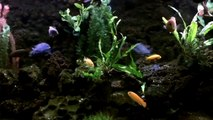 DIY aquarium background - video dailymotion