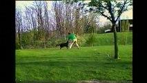 un chien avec un tuyau d'arrosage