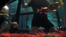 Shark diving( rencontres avec les requins au Marineland)