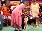 Sandcastle's Storm in a Teacup, Crufts 2007
