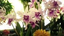 Redlands International Orchid Festival featuring Jeff Adkins - Documentary trailer.