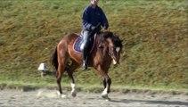 Travail du cheval dans la posture aplatie (l'école d'Auriste de Saumur)