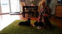 Rückruf mit der Hundepfeife! Wie bringe ich meinem Hund bei, zuverlässig zu mir zurück zu kommen?