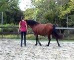 Le Cheval, regard et complicité/Horse, glance and ...