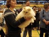 Photos from cat exhibitions