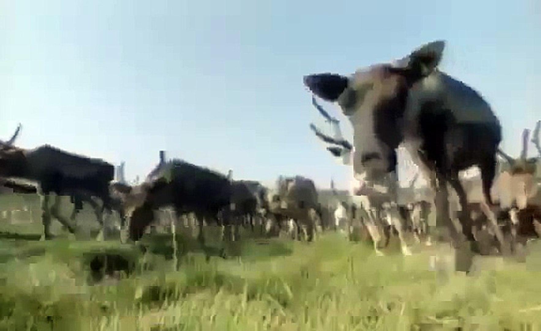[Full Documentary 2014] Return of the Caribou - NEW+ ANIMAL DOCUMENTARY