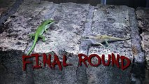 Mortal Kombat Lizards fighting to the death.