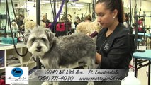 """""""Professional Grooming Coral Springs"""", """"Dog Grooming School Coral Springs"""", """"Grooming Coral Springs"""""""